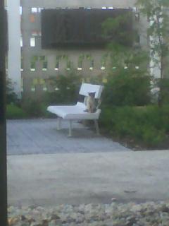 street cat @ St John Vianney College Seminary, Miami, FL